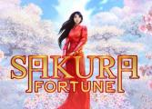 Sakura Fortune slot game
